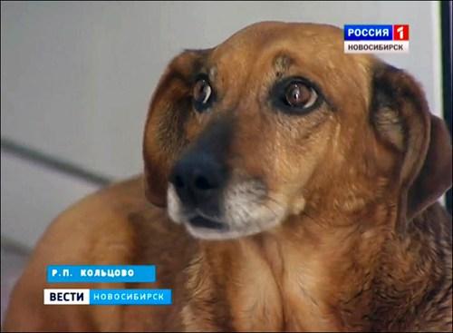 5 chú chó phiên bản Hachiko khiến hàng triệu trái tim lay động - 3
