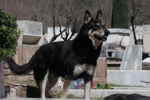5 chú chó phiên bản Hachiko khiến hàng triệu trái tim lay động - 4