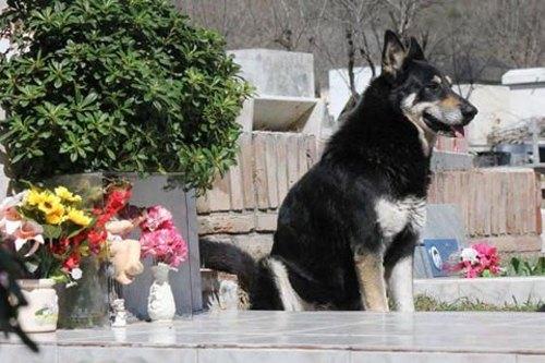 5 chú chó phiên bản Hachiko khiến hàng triệu trái tim lay động - 5