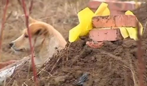 5 chú chó phiên bản Hachiko khiến hàng triệu trái tim lay động - 8