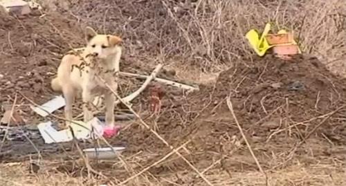 5 chú chó phiên bản Hachiko khiến hàng triệu trái tim lay động - 9