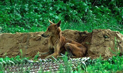 5 chú chó phiên bản Hachiko khiến hàng triệu trái tim lay động - 11
