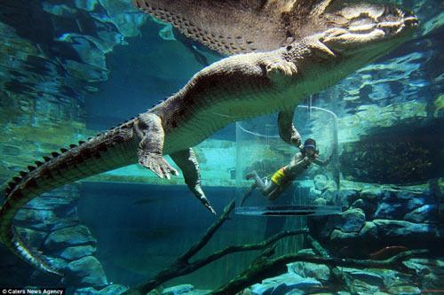 """Thử cảm giác làm """"mồi nhử"""" cho cá sấu khổng lồ - 1"""