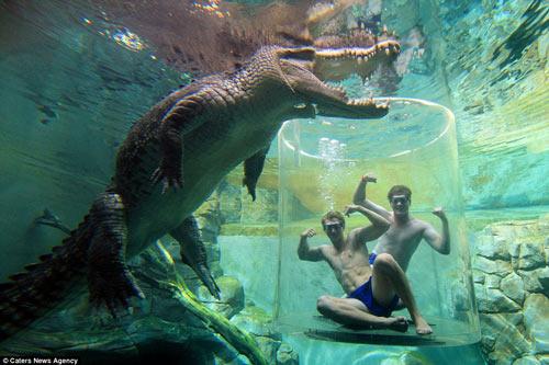 """Thử cảm giác làm """"mồi nhử"""" cho cá sấu khổng lồ - 2"""