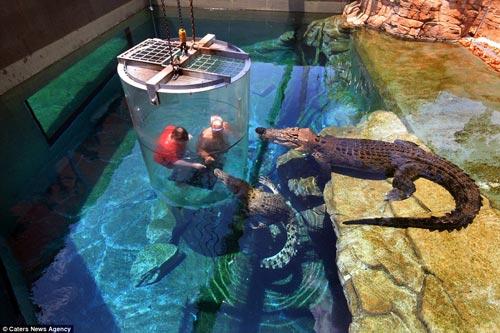 """Thử cảm giác làm """"mồi nhử"""" cho cá sấu khổng lồ - 3"""