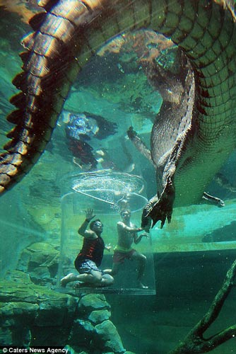 """Thử cảm giác làm """"mồi nhử"""" cho cá sấu khổng lồ - 5"""