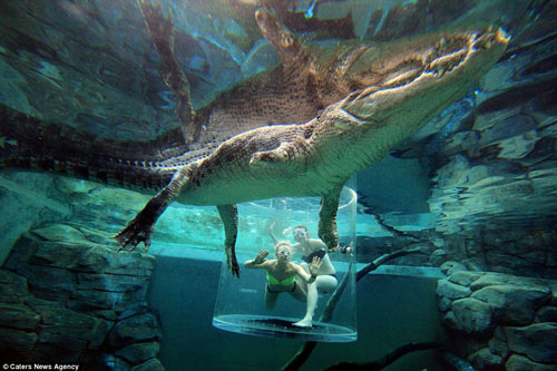 """Thử cảm giác làm """"mồi nhử"""" cho cá sấu khổng lồ - 6"""