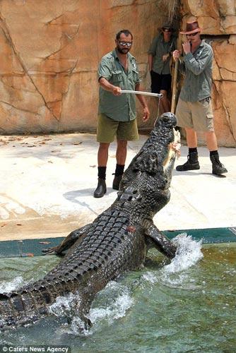 """Thử cảm giác làm """"mồi nhử"""" cho cá sấu khổng lồ - 8"""
