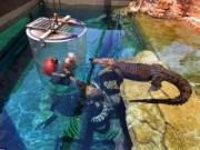 """Thử cảm giác làm """"mồi nhử"""" cho cá sấu khổng lồ"""
