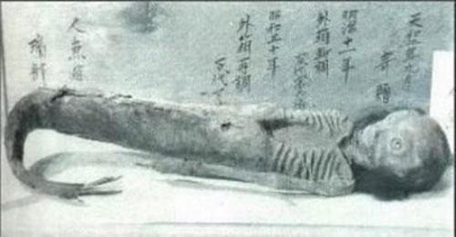 Kỳ bí những xác ướp nàng tiên cá - 1