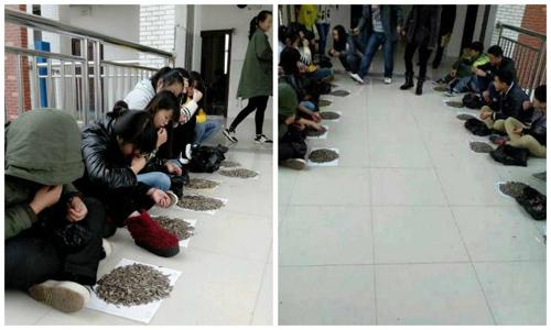 Phạt học sinh ăn 50kg hạt hướng dương vì tội ăn vặt