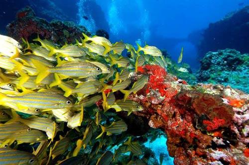 Đến hòn đảo thu phí bảo vệ môi trường của du khách - 7