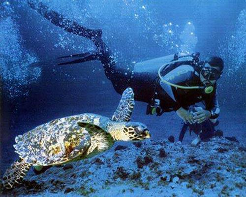 Đến hòn đảo thu phí bảo vệ môi trường của du khách - 8