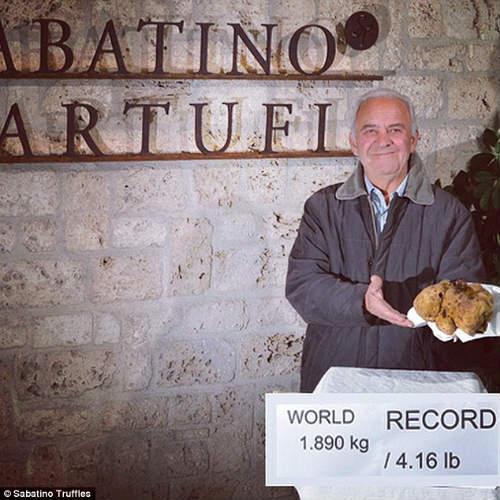 Cận cảnh cây nấm quý khổng lồ giá 1 triệu USD - 3