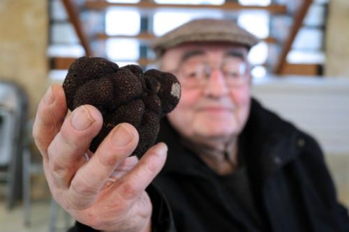 Cận cảnh cây nấm quý khổng lồ giá 1 triệu USD - 4