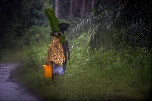 Không tin bác sỹ, bố ôm con nhiễm Ebola trốn vào rừng - 4