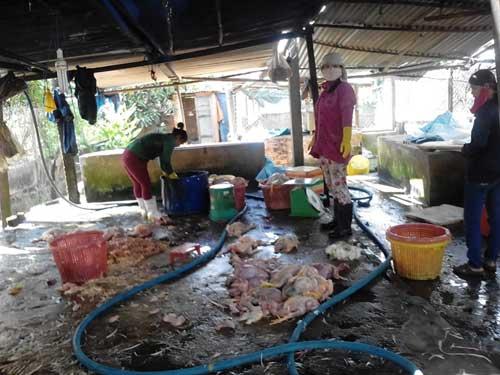 Đồng Nai: Phát hiện cơ sở sản xuất thịt gà thối - 1