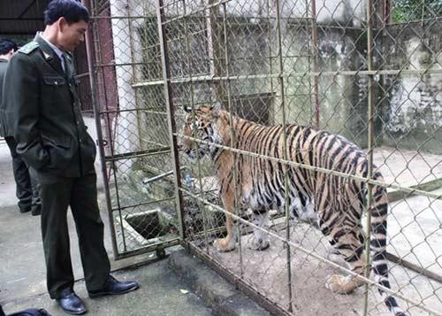 """""""Đột nhập"""" trại nuôi hổ lớn nhất ở Thanh Hóa - 11"""