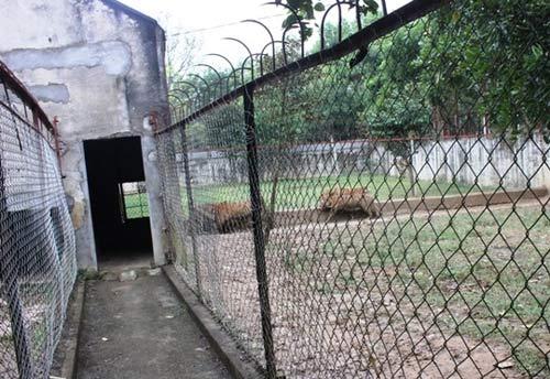 """""""Đột nhập"""" trại nuôi hổ lớn nhất ở Thanh Hóa - 5"""