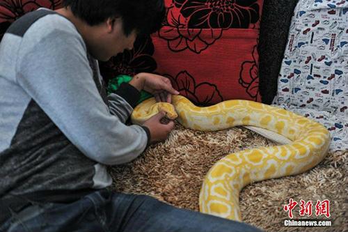 10 năm sống chung với 25 con rắn khổng lồ - 2