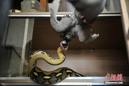 10 năm sống chung với 25 con rắn khổng lồ - 9