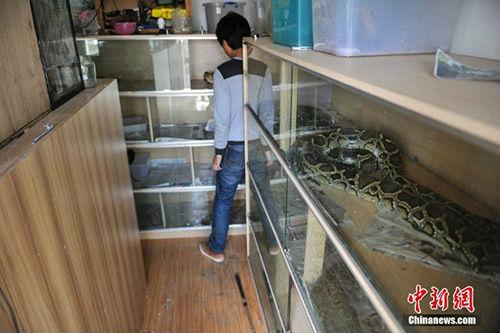 10 năm sống chung với 25 con rắn khổng lồ - 4