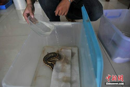 10 năm sống chung với 25 con rắn khổng lồ - 6