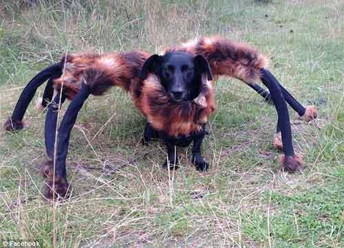 """Video chú """"chó nhện"""" hút hơn 60 triệu lượt xem - 1"""