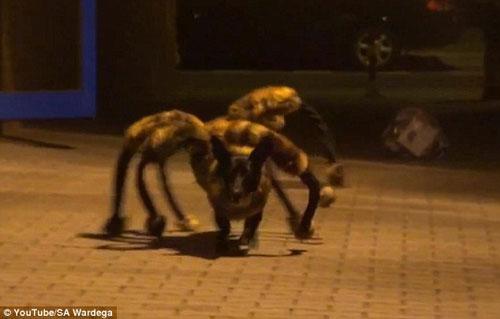 """Video chú """"chó nhện"""" hút hơn 60 triệu lượt xem - 2"""