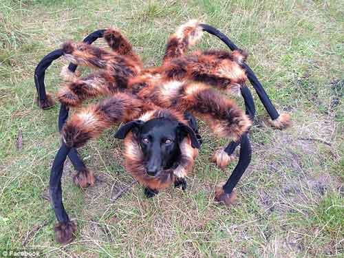 """Video chú """"chó nhện"""" hút hơn 60 triệu lượt xem - 7"""