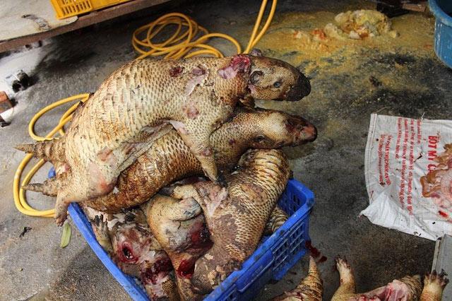 Phát hiện cơ sở giết mổ động vật hoang dã giữa Thủ đô