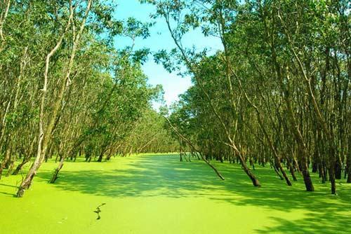 Rừng tràm Trà Sư, tấm thảm xanh dịu mát miền Tây - 2