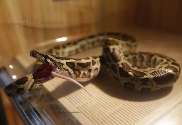 9x TQ nuôi hơn 20 con rắn độc làm thú cưng
