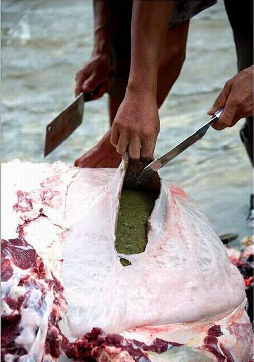 Lạ lùng món... lẩu phân bò ở Trung Quốc - 1