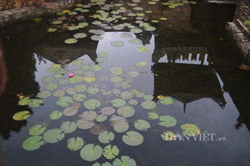 Chiêm ngưỡng nhà vườn Bến Xuân – nét đẹp quê xứ Huế - 14