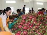 """Thị trường - Tiêu dùng - Trái cây Thái """"mượn"""" Việt Nam tiến vào Trung Quốc"""