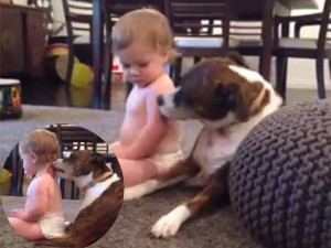 """Bạn trẻ - Cuộc sống - Clip: Bé con thích mê khi được chó yêu """"mát xa"""""""