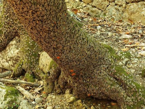Petaloudes - thung lũng bướm độc đáo ở Hy Lạp - 2