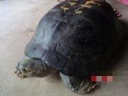 Tin tức trong ngày - Nghệ An: Dân đổ xô đi xem rùa quý, có hình thù kỳ lạ
