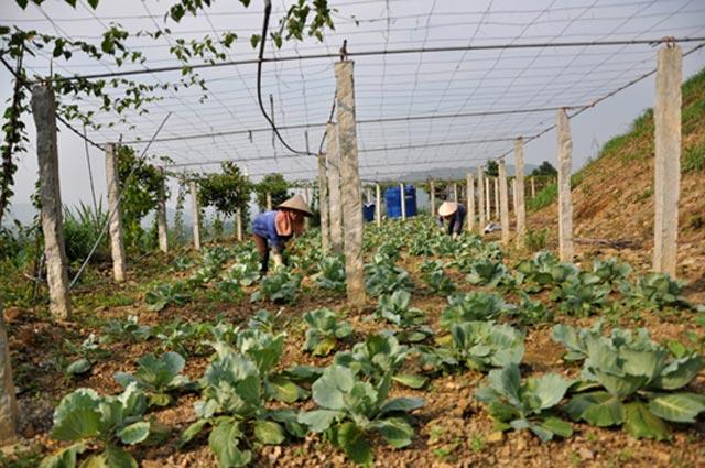 Cận cảnh trang trại lợn rừng hữu cơ độc đáo ở VN - 12