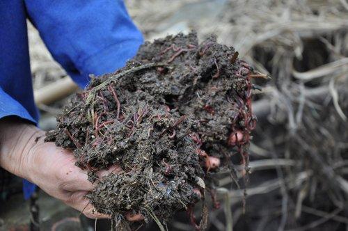 Cận cảnh trang trại lợn rừng hữu cơ độc đáo ở VN - 5