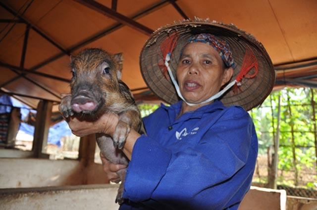 Cận cảnh trang trại lợn rừng hữu cơ độc đáo ở VN - 9