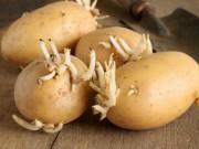 Sức khỏe đời sống - Nguy hiểm khôn lường khi ăn thực phẩm mọc mầm