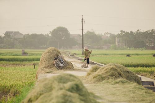 """Tìm về làng quê thanh bình với bộ ảnh """"Mùa gặt"""" - 7"""