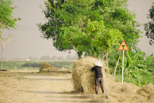 """Tìm về làng quê thanh bình với bộ ảnh """"Mùa gặt"""" - 8"""