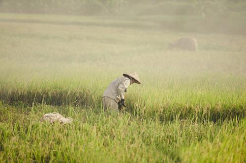 """Tìm về làng quê thanh bình với bộ ảnh """"Mùa gặt"""" - 3"""