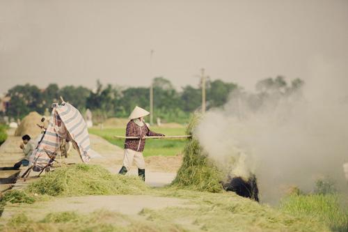"""Tìm về làng quê thanh bình với bộ ảnh """"Mùa gặt"""" - 4"""