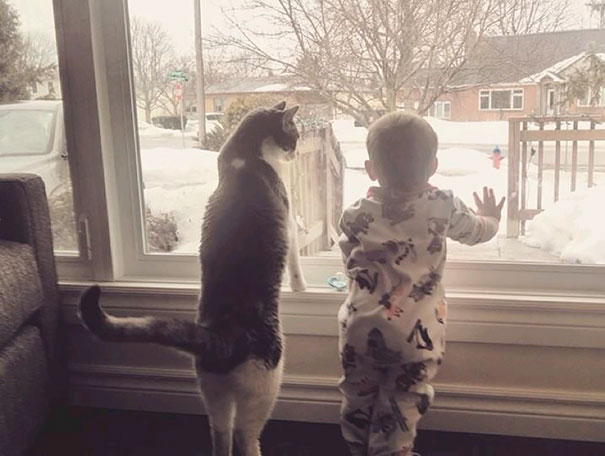 20 bức ảnh chứng tỏ bé nên có một bạn mèo - 4