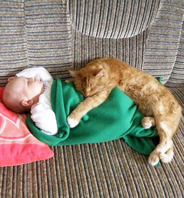 20 bức ảnh chứng tỏ bé nên có một bạn mèo - 7