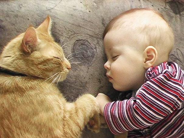 20 bức ảnh chứng tỏ bé nên có một bạn mèo - 8